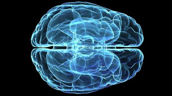 Máme tři mozky