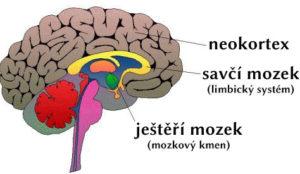 Součinnost tří mozků